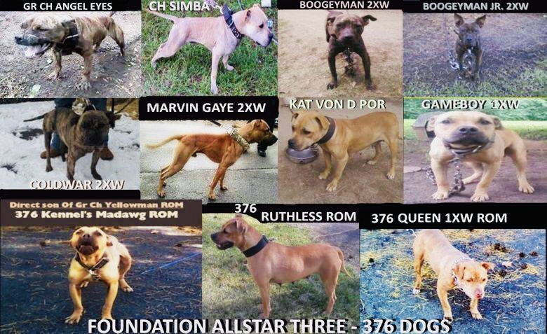 376 Kennels Specializing In The Best Bolio Redboy Jocko Bloodlines